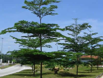 Árboles medianos