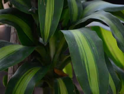 Plantas de sombra