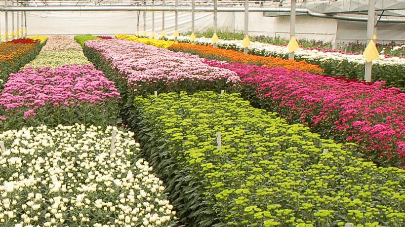 Arquitectura de los viveros de flores